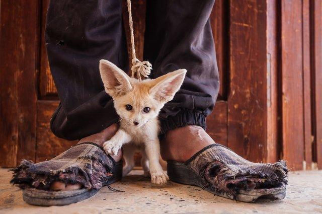 چه مجازاتی در انتظار حیوان آزارها است ؟