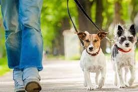 قانون در مورد سگ گردانی چه می گوید ؟