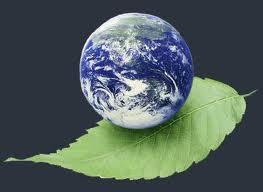 حفاظت از محیط زیست؛ از قانون تا عمل