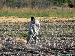 آییننامه اجرایی قانون جلوگیری از خردشدن اراضی کشاورزی و ایجاد قطعات مناسب فنی و اقتصادی