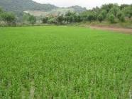 مفهوم حق ریشه و ارزیابی حق ریشه کشاورزی