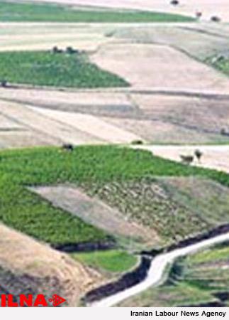 رای اصراری در خصوص حق ریشه-انتقال نسق زراعی به موجب سند عادی